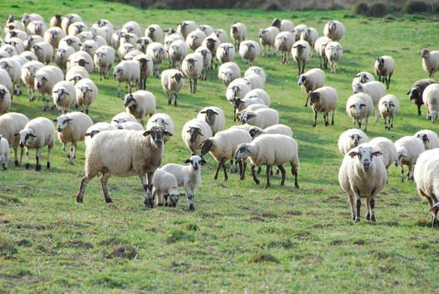 Agricultura y Ganadería en Bergasillas Bajera